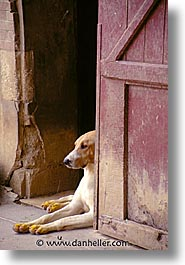 dogs, europe, france, loire valley, vertical, photograph