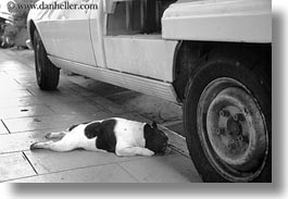black and white, dogs, emotions, europe, flats, france, horizontal, humor, paris, photograph