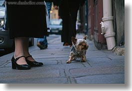 dogs, emotions, europe, feet, france, horizontal, humor, paris, shitzu, womans, photograph