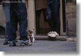 among, dogs, europe, france, horizontal, legs, paris, small, photograph