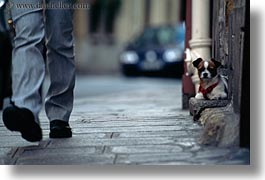 dogs, europe, france, horizontal, paris, small, step, photograph