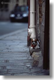 dogs, europe, france, paris, small, step, vertical, photograph