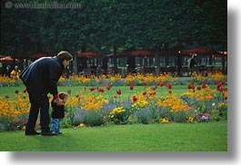 europe, fathers, flowers, france, horizontal, paris, red, sons, tulips, photograph