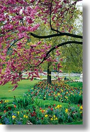 europe, flowers, france, paris, pink, trees, vertical, photograph