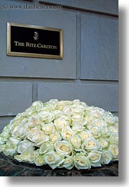 europe, flowers, france, hotels, paris, ritz, roses, signs, vertical, yellow, photograph