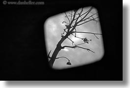 black and white, europe, france, horizontal, mirrors, paris, readview, trees, photograph