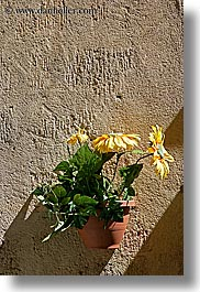 aix en provence, colors, europe, flowers, france, green, nature, provence, vertical, walls, yellow, photograph