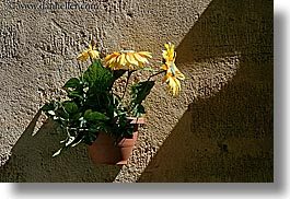 aix en provence, colors, europe, flowers, france, green, horizontal, nature, provence, walls, yellow, photograph