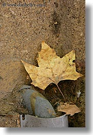 aix en provence, browns, colors, europe, france, leaves, provence, vertical, photograph