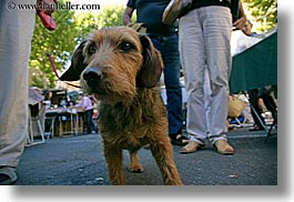 aix en provence, dogs, europe, france, horizontal, provence, scruffy, photograph