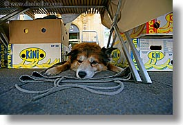 aix en provence, colors, dogs, europe, france, horizontal, provence, sleeping, yellow, photograph