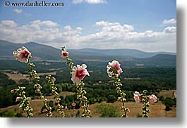 bargeme, clouds, europe, flowers, france, hibiscus, horizontal, nature, provence, scenics, sky, photograph