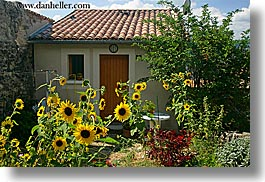 castellane, colors, europe, france, horizontal, houses, provence, sunflowers, yellow, photograph