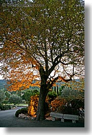 bastide moustiers, dusk, europe, france, moustiers, nature, plants, provence, st marie, trees, underlit, vertical, photograph