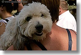 dogs, europe, france, horizontal, moustiers, provence, shoulders, st marie, photograph