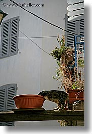 cats, emotions, europe, france, headless, humor, provence, seillans, vertical, photograph