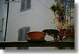 cats, emotions, europe, france, headless, horizontal, humor, provence, seillans, photograph