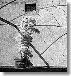 black and white, bright, europe, france, nature, plants, provence, shadows, square format, st paul, trees, photograph