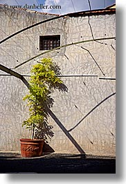 bright, europe, france, nature, plants, provence, shadows, st paul, trees, vertical, photograph
