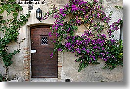 bougainvilleas, doors, europe, flowers, france, horizontal, materials, nature, provence, st paul, stones, photograph