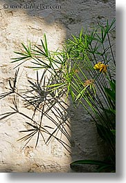 europe, france, plants, provence, shadows, st paul, vertical, photograph