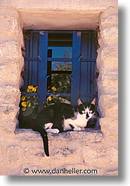 animals, cats, europe, france, provence, tarascon, vertical, photograph