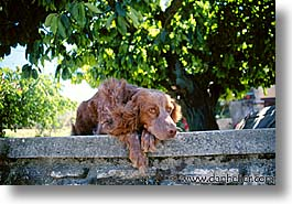 animals, dogs, europe, france, horizontal, provence, tarascon, photograph