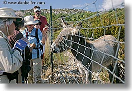 clothes, donkeys, europe, france, groups, hats, hikers, horizontal, people, provence, womens, photograph