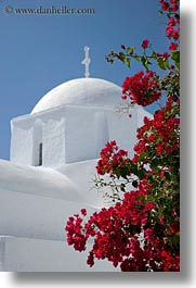 amorgos, bougainvilleas, churches, europe, flowers, greece, nature, red, vertical, white wash, photograph