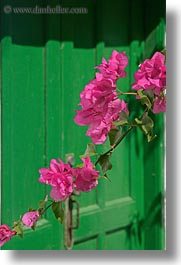 amorgos, bougainvilleas, doors, europe, flowers, greece, green, nature, pink, vertical, photograph