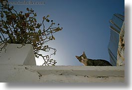 amorgos, cats, down, europe, greece, horizontal, looking, perspective, upview, photograph