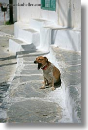 amorgos, dogs, europe, greece, vertical, white wash, yawn, photograph