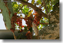 amorgos, europe, grapes, greece, hangings, horizontal, photograph