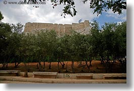 acropolis, athens, europe, greece, horizontal, olives, trees, photograph