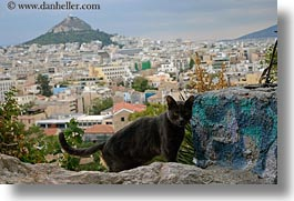 animals, athens, black, buildings, cats, cityscapes, europe, greece, horizontal, structures, photograph