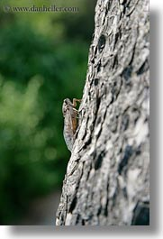 animals, athens, cricket, europe, greece, insects, trees, vertical, photograph