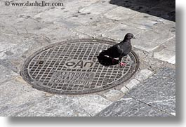 athens, covers, europe, greece, horizontal, manholes, pigeons, streets, photograph