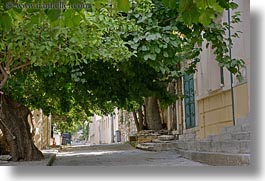 athens, canopy, europe, greece, horizontal, streets, trees, photograph