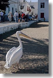 beaches, europe, greece, mykonos, pelicans, vertical, photograph