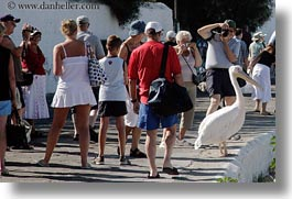emotions, europe, greece, horizontal, humor, mykonos, pelicans, photographing, white, photograph