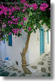 bougainvilleas, europe, greece, mykonos, pink, vertical, white wash, photograph