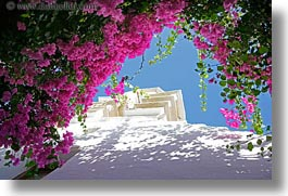 bougainvilleas, europe, greece, horizontal, mykonos, pink, white wash, photograph