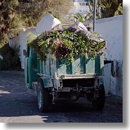 europe, flowers, greece, mykonos, square format, trucks, photograph
