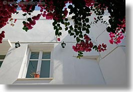 bougainvilleas, doors & windows, europe, flowers, greece, horizontal, nature, naxos, perspective, red, upview, white wash, windows, photograph
