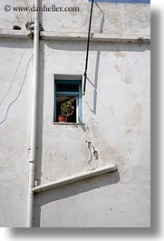 doors & windows, europe, greece, naxos, pipes, plants, tiny, vertical, white, white wash, windows, photograph