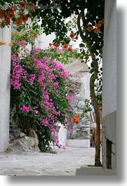 bougainvilleas, europe, flowers, greece, nature, naxos, pink, vertical, photograph