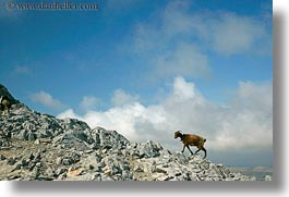 climbing, europe, goats, greece, horizontal, mountains, naxos, scenics, photograph