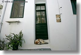 dogs, doors, europe, greece, green, horizontal, step, tinos, photograph