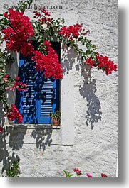 blues, bougainvilleas, europe, flowers, greece, red, tinos, vertical, white wash, windows, photograph