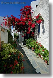 alleys, bougainvilleas, europe, flowers, flowery, greece, red, tinos, vertical, white wash, photograph